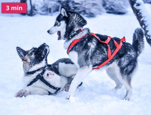 Chraňte v zimě svého psa